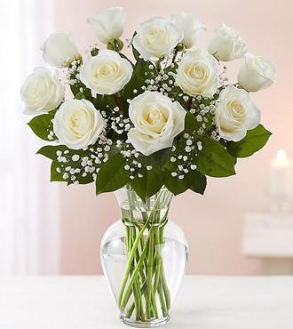 鲜花:与众不同 12枝白玫瑰
