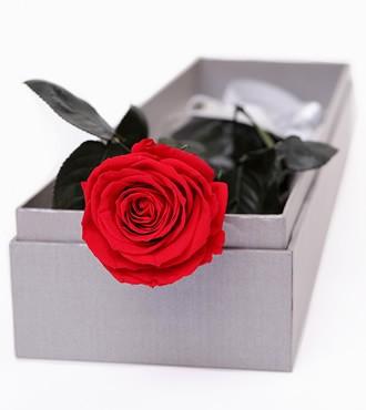 保鲜花:一生的承诺