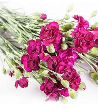 多头康乃馨 深紫色 20支/扎 鲜切花
