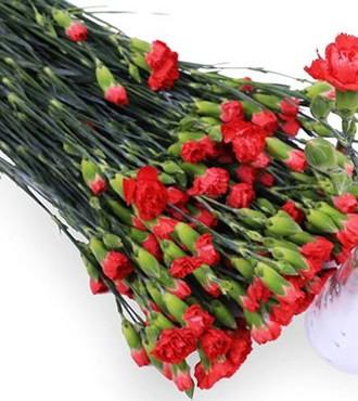 多头康乃馨 红色 20支/扎 鲜切花