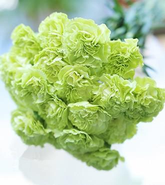 康乃馨 绿色 20支/扎 鲜切花
