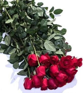玫瑰 红色 20支/扎 鲜切花