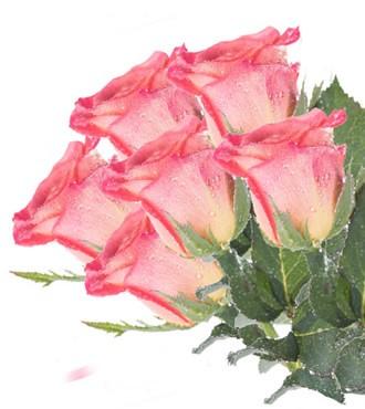 彩色玫瑰 口红 20支/扎 鲜切花