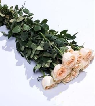 玫瑰 香槟色 20支/扎 鲜切花