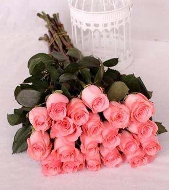 玫瑰 戴安娜粉 20支/扎 鲜切花