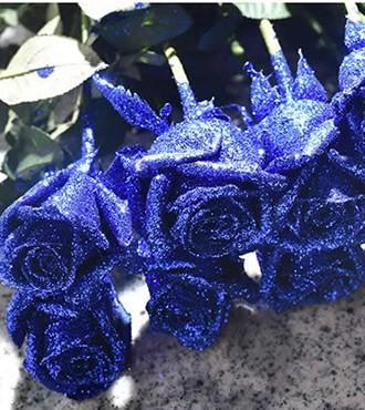 玫瑰 蓝色妖姬 20支/扎 鲜切花