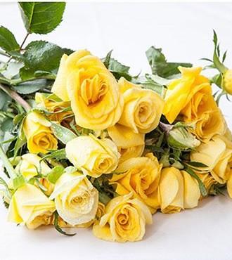 小蔷薇 多头玫瑰 黄色 10支/扎鲜切花