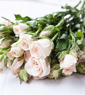 小蔷薇 多头玫瑰 香槟 10支/扎 鲜切花