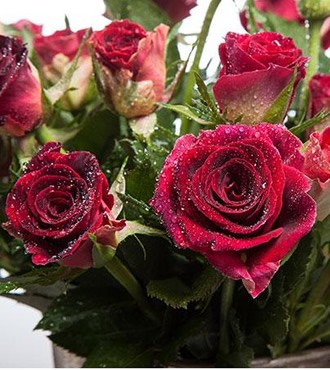 小蔷薇 多头玫瑰 玫红色 10支/扎 鲜切花