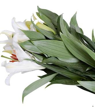 百合 香水百合 三头 白色 10支/扎 鲜切花
