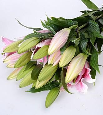 香水百合 三头 粉色 10支/扎 鲜切花