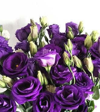 洋桔梗 深紫色 10支/扎 鲜切花