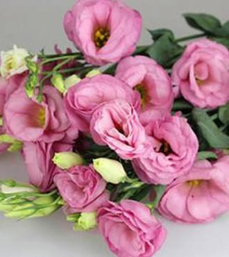 洋桔梗 粉色 10支/扎 鲜切花