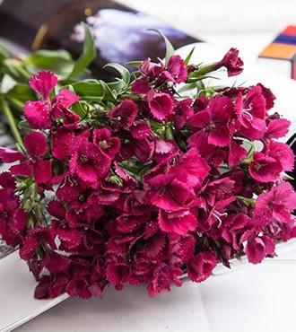 相思梅玫红色 无数支/扎 鲜切花