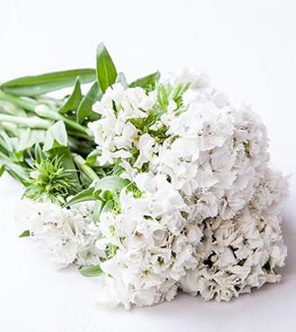 相思梅 白色 无数支/扎 鲜切花