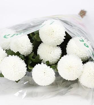 乒乓菊 白色 10枝/扎 鲜切花