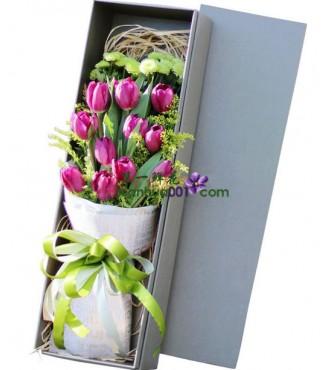 鲜花:美好时光 11枝郁金香