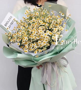 鲜花:清风徐来(洋甘菊)