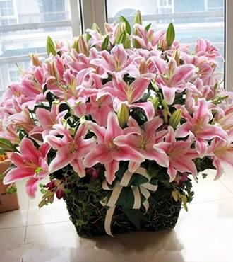 鲜花:全心全意 40枝粉百合