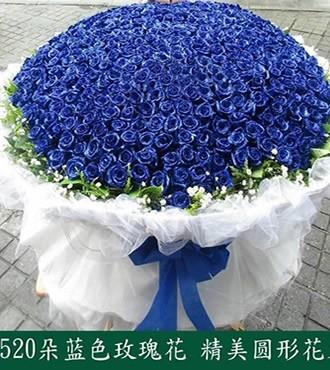 鲜花:天涯伴此生 520枝蓝玫瑰